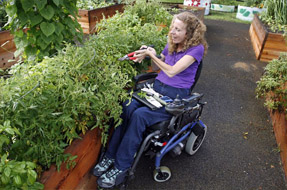 Woman in wheelchair gardening