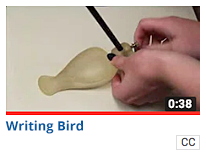 Writing-Writing Bird